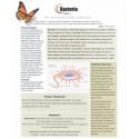 Bacteria (BAC) - BioEnergy Patch (10 Pack)