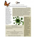 VIR (Virus) - BioEnergy Patch (10 Pack)